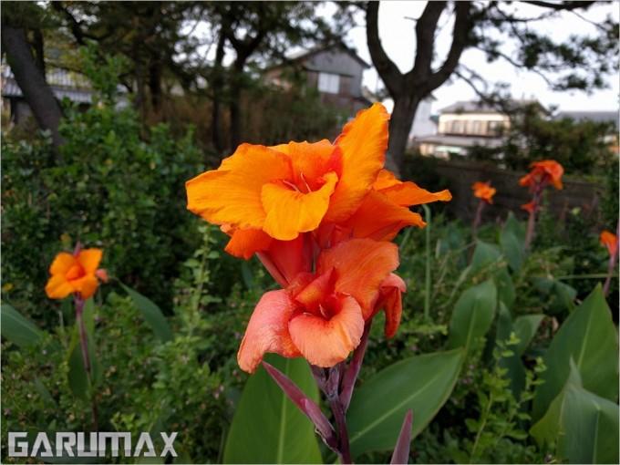 garumax-IMG_20151024_134004
