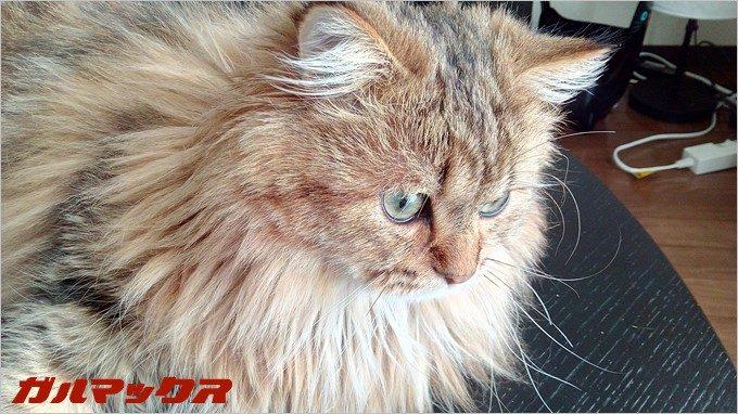 BLUBOO Edgeで飼い猫のジョコを撮影
