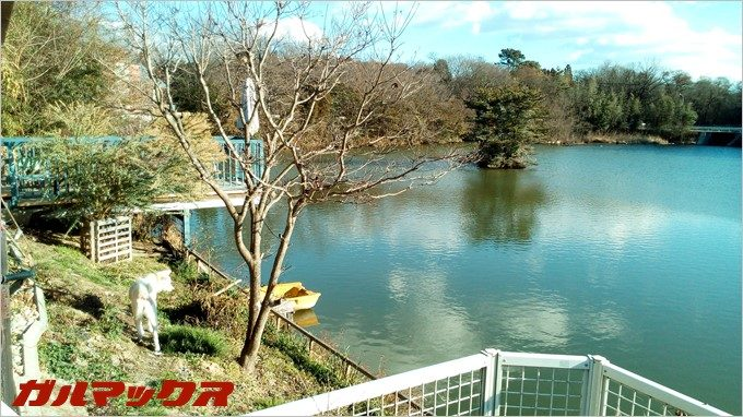 BLUBOO Edgeで池を撮影