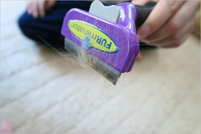 ファーミネーターでサラッとブラッシングするだけでごっそり抜け毛が取れます。