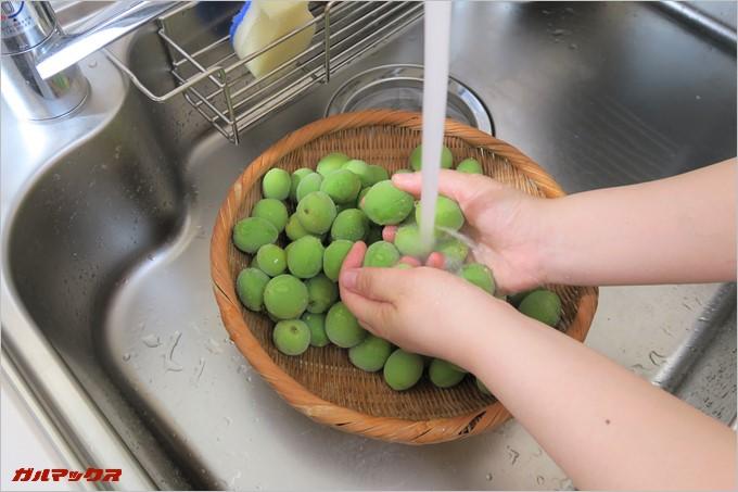 綺麗に梅を洗います。
